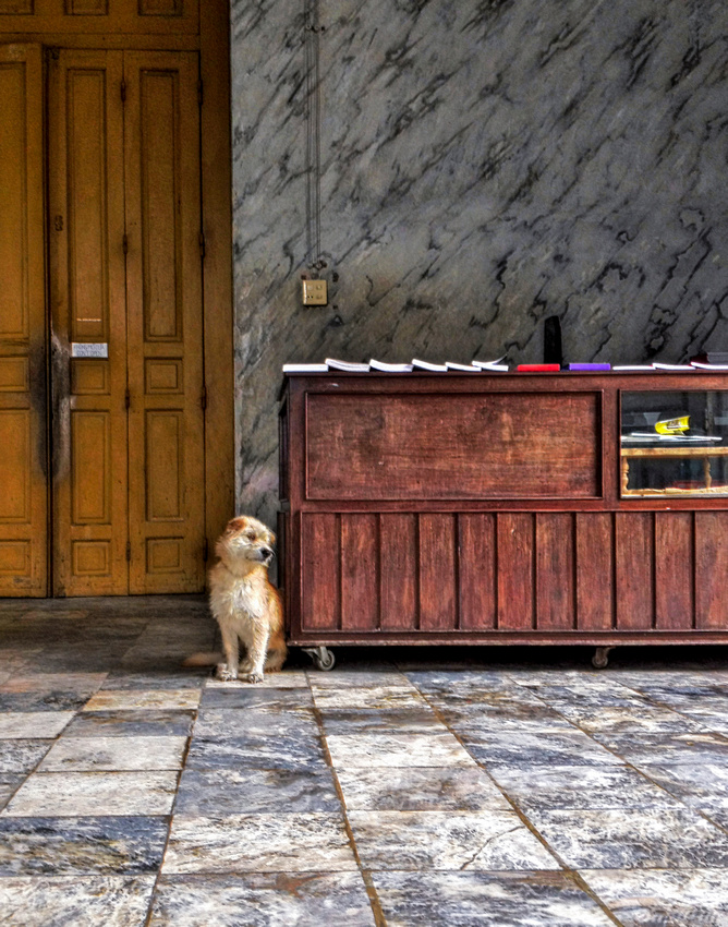 Dog in Vietnamese Temple